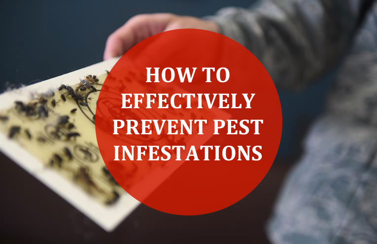How To Properly Prevent Pest Infestations